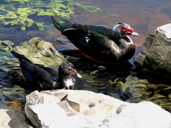Ducks Art Print featuring the digital art Lake Toho Ducks by Karen Sheltrown