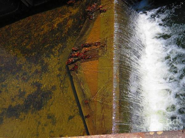 Water Art Print featuring the photograph Lock Detail 06 by Rrrose Pix