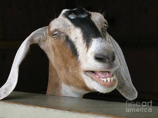 Goat Art Print featuring the photograph Maa-aaa by Ann Horn