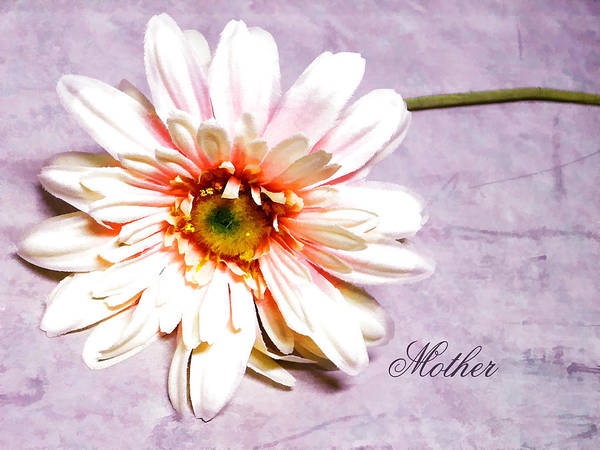 Pink Gerber Daisy. Gerber Daisy. Pink And White Flowers. Pink And White Petals. Green Stem. Word Art. Mother's Day Greeting Card. Greeting Card. Texture. Photography. Print. Canvas. Birthday Greeting Card. Nature. Art Print featuring the photograph Mother's Gerber Daisy by Mary Timman