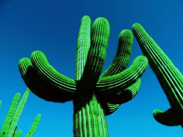 Catus Neon Colors Green Blue Art Print featuring the photograph Neon Catus by Todd Sherlock