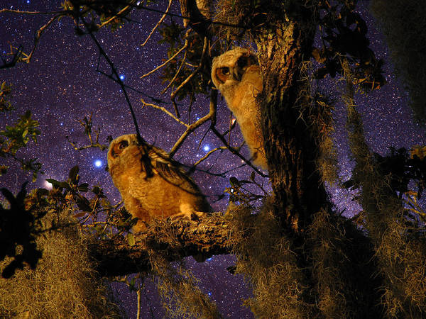 Phil Art Print featuring the photograph Night Owls by Phil Penne