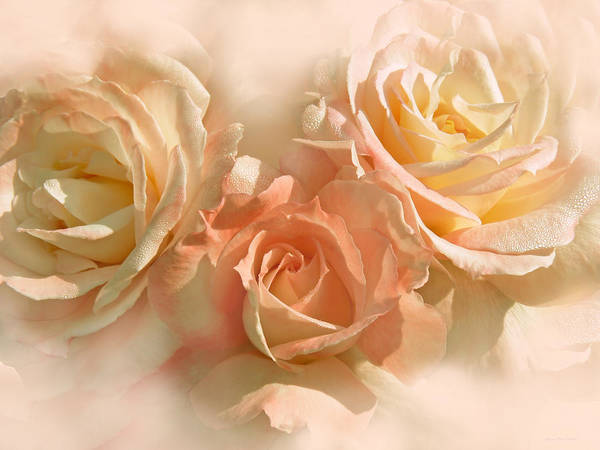 Rose Art Print featuring the photograph Peach Roses In The Mist by Jennie Marie Schell