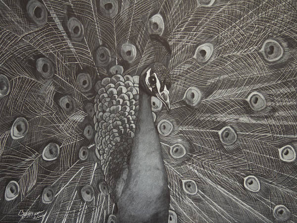 Peacock Art Print featuring the drawing Peacock by Byron Moss