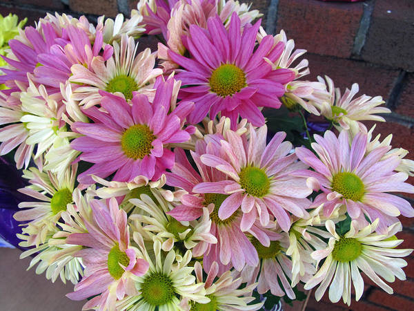 Daisy Art Print featuring the photograph Perky As A by Barbara McDevitt