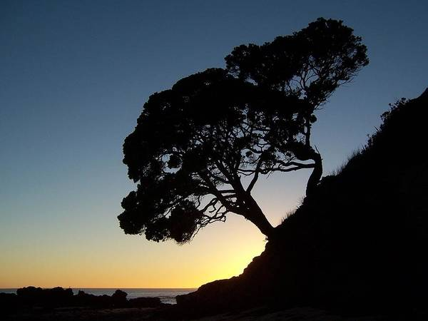 New Zealand Art Print featuring the photograph Pohutukawa Trees At Sunrise by Peter Mooyman