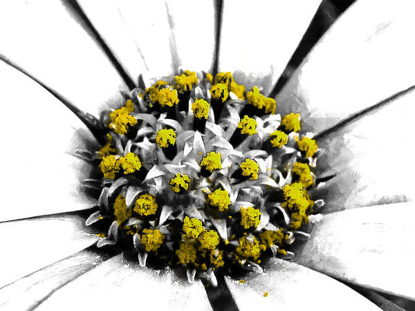Selective Art Print featuring the photograph Pollen by Steve Taylor