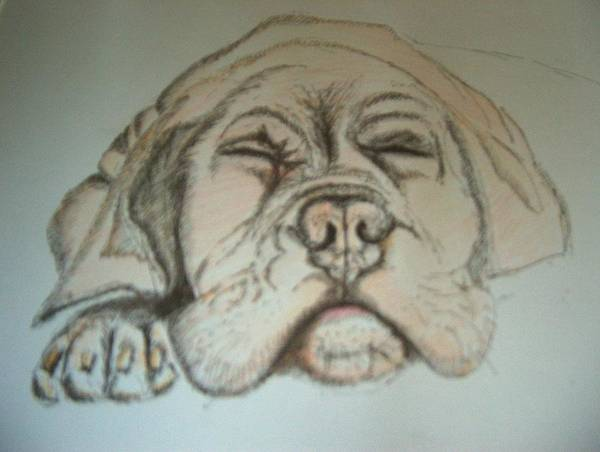 Art Print featuring the drawing Puppy Sleeping by Manuel Charles Martin