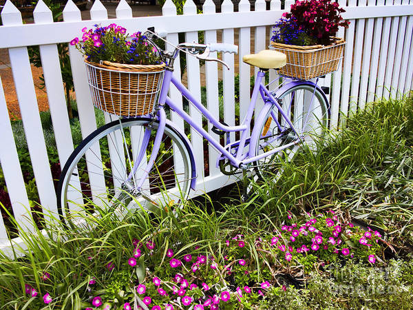 Bicycle Art Print featuring the photograph Purple Bicycle And Flowers by David Smith
