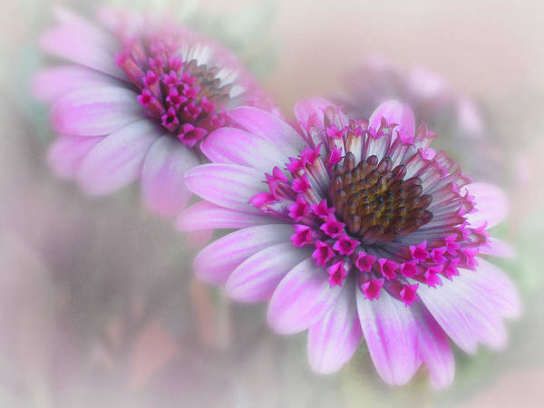 Flower Art Print featuring the photograph Purple Blooms by David and Carol Kelly