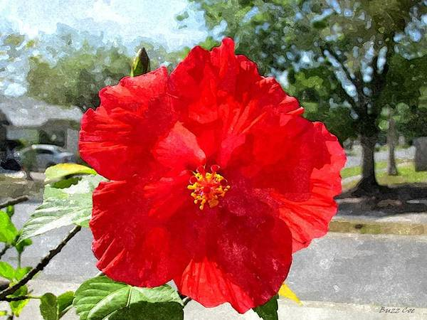 Hibiscus Art Print featuring the photograph Red Hibiscus In The Neighborhood by Buzz Coe