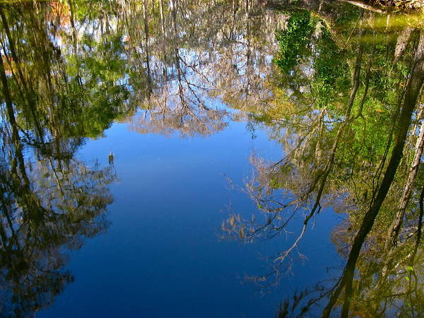 Reflection Art Print featuring the photograph Reflection by Denise Mazzocco