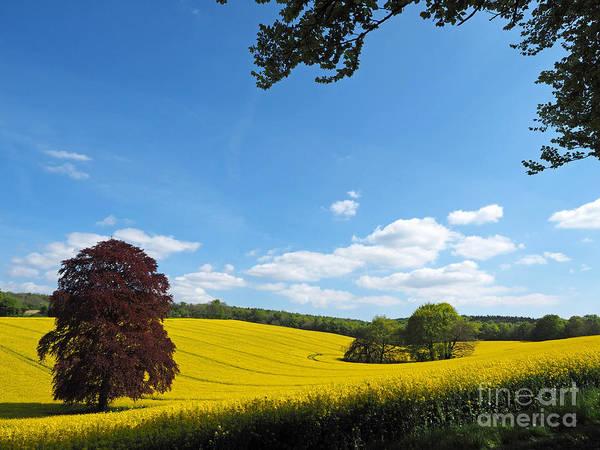 Landscape Art Print featuring the photograph Rural Hampshire 1 by Alex Cassels