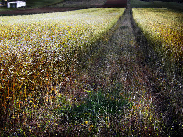 Landscape Art Print featuring the photograph Ruralscape #1 by Alfredo Gonzalez