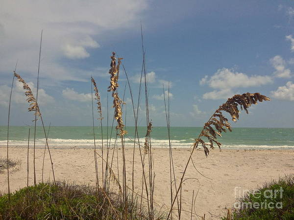 Sea Oats Art Print featuring the photograph Sea Oats by Robert Brice