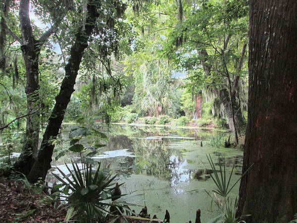 Nature Print featuring the photograph Serene Swamp by Silvie Kendall