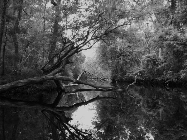 Old Cypress Tree Fallen In River. Art Print featuring the photograph Slow Ride. by Amber Lopez