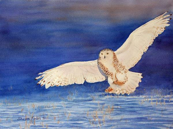 Owl Art Print featuring the painting Snowy Owl In Flight by Sharon Farber