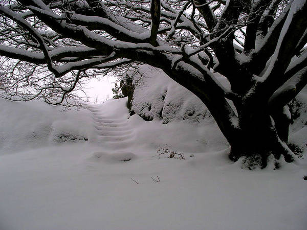 Snow Art Print featuring the photograph Snowy Path by Amanda Moore