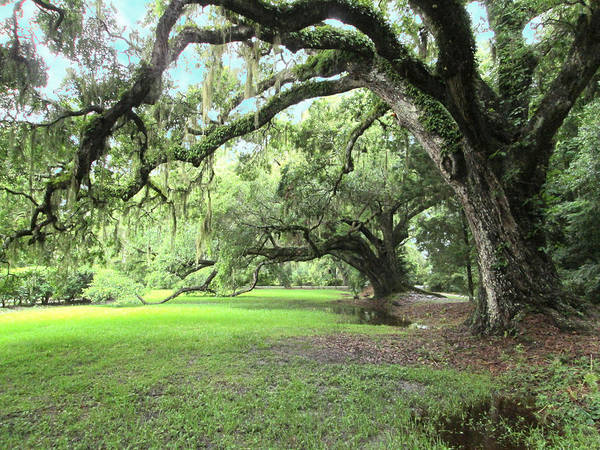 Landscape Art Print featuring the photograph Southern Comfort by Silvie Kendall