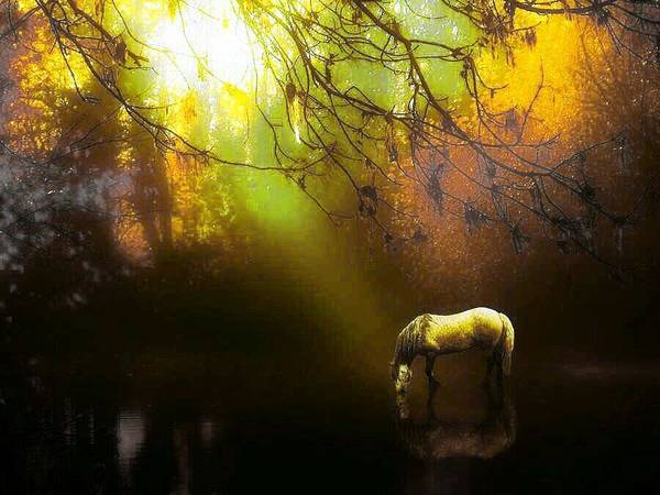 Horse Art Print featuring the mixed media Spot Light by Tracie Howard