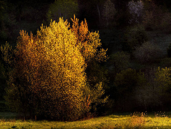 Trees Art Print featuring the photograph Spring Light by Thomas Young