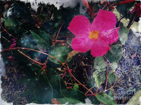 Nature Art Print featuring the photograph Standing Still by Denisse Del Mar Guevara