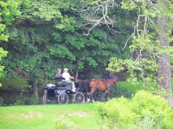 Horses And Carriage Art Print featuring the photograph Summer Stroll by Elizabeth Dow