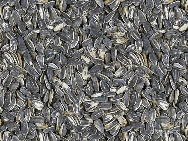 Crop Art Print featuring the digital art Sunflower Seeds by Bedros Awak