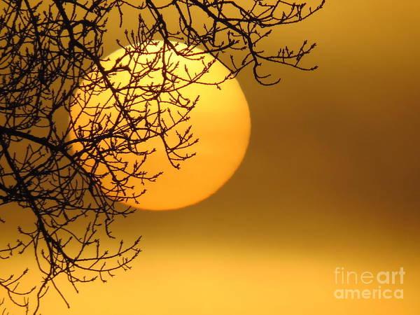 Sunrise Art Print featuring the photograph Sunrise Through The Fog by David Lankton