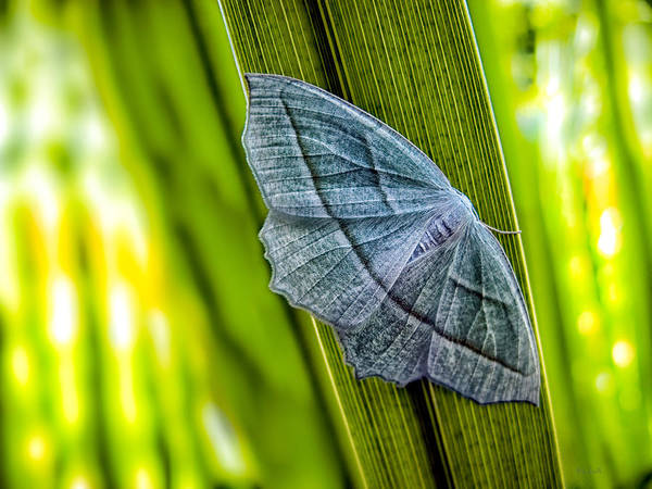 Butterfly Art Print featuring the photograph Tiny Moth On A Blade Of Grass by Bob Orsillo