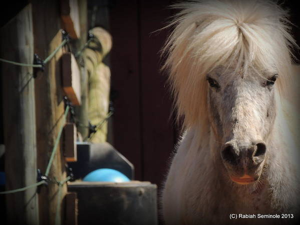 Horse Art Print featuring the photograph Tonkas Bad Hair Day by Rabiah Seminole