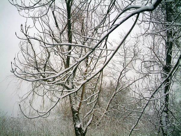 Landscape. Treescape. Photograph Of Snow Covered Tree Art Print featuring the photograph Tree Lace by Desline Vitto