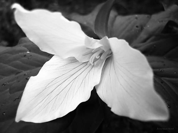 Trillium Art Print featuring the photograph Trillium Flower In Black And White by Jennie Marie Schell