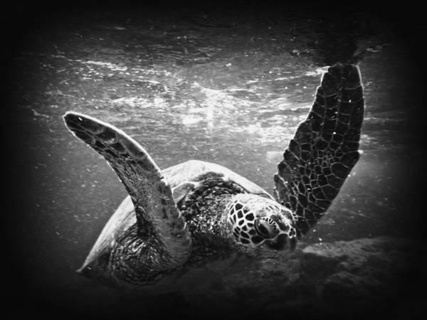 B&w Black Rock Art Print featuring the photograph Turtle by Byron Fair
