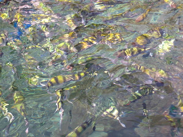 Phi Art Print featuring the photograph Underwater - Long Boat Tour - Phi Phi Island - 011325 by DC Photographer