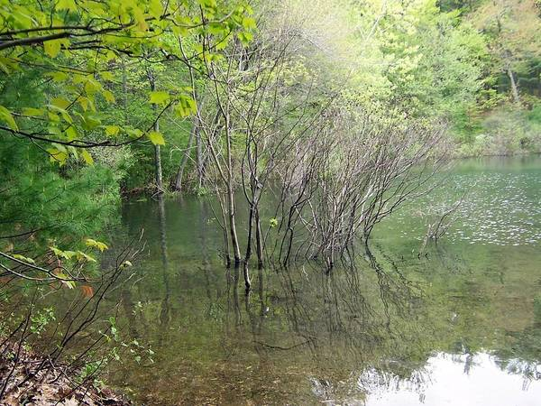 Walden Pond Art Print featuring the photograph Walden Pond by Catherine Gagne