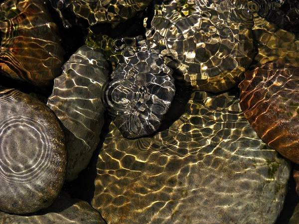 Still Life Art Print featuring the photograph Water Rocks by Liz Hill