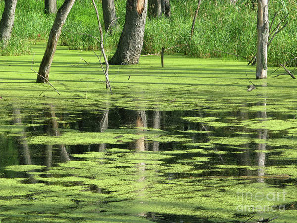 Landscape Art Print featuring the photograph Wetland Reflection by Ann Horn