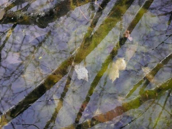 Wetlands Art Print featuring the photograph Wetland Reflections by Angela Hansen