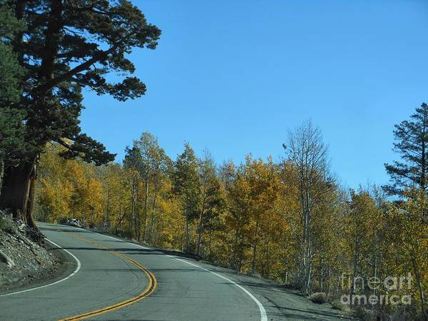 Hwy 88 Art Print featuring the photograph What A Drive by Nancy Chambers