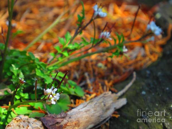 Flora Art Print featuring the photograph White Green Gold by Rrrose Pix