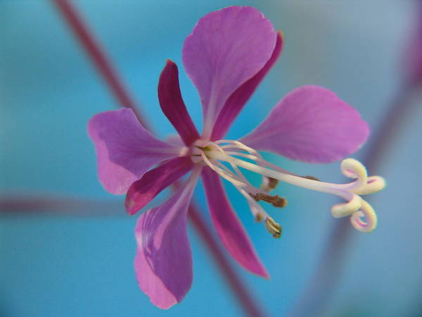 Macro Art Print featuring the photograph Wildflowers by Jeri lyn Chevalier