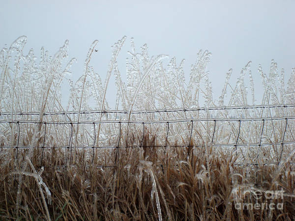 Winter Art Print featuring the photograph Winter Harvest by Laura DeCamp