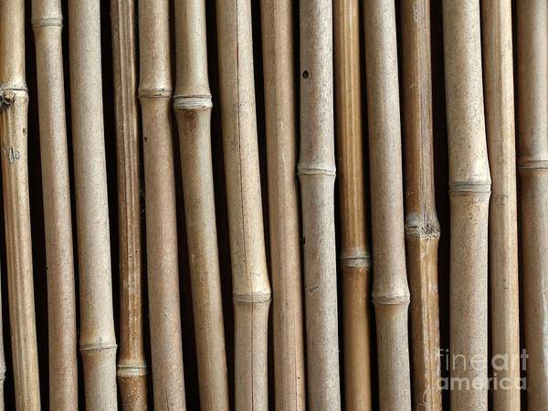 Bamboo Art Print featuring the photograph Bamboo Fence by Yali Shi