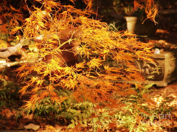 Art Print featuring the photograph Fire Bush by Rod Ismay