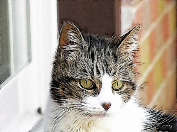 Cat Art Print featuring the photograph Memories Of 2011 by Maciek Froncisz
