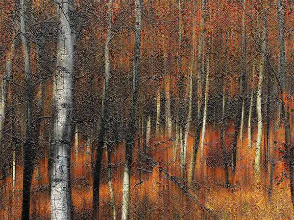 Trees Art Print featuring the photograph 2385 by Peter Holme III