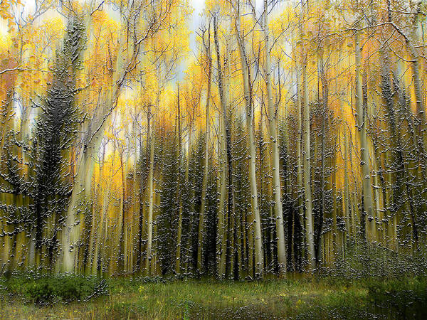 Trees Art Print featuring the photograph 2399 by Peter Holme III