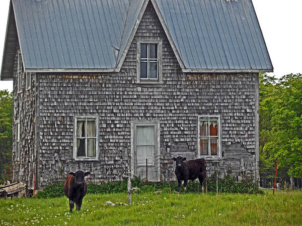 Abandoned House Art Print featuring the photograph Abandoned Cow House - Barrow Bay by Cyryn Fyrcyd